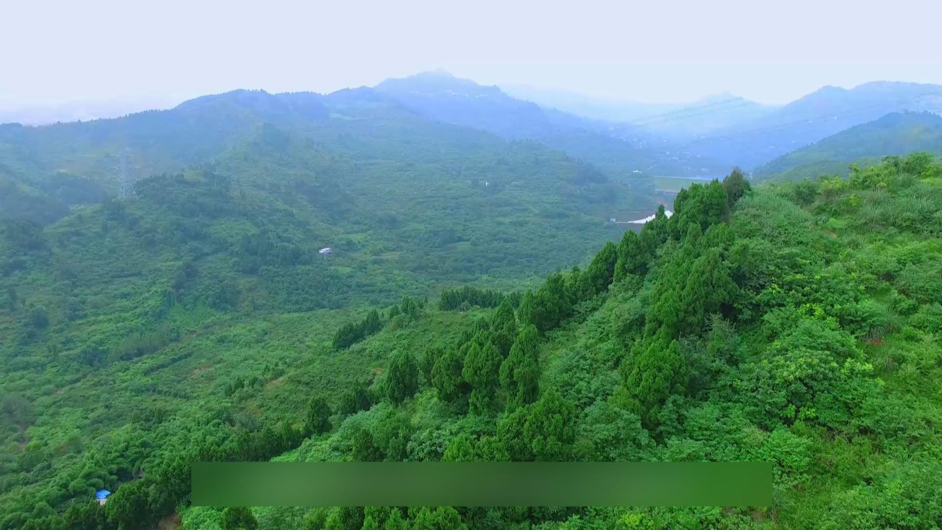 成都龙泉山城市森林公园建设有序推进[9月24日]