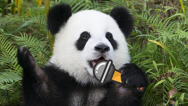 一起来唱<br>《熊猫拜年歌》
