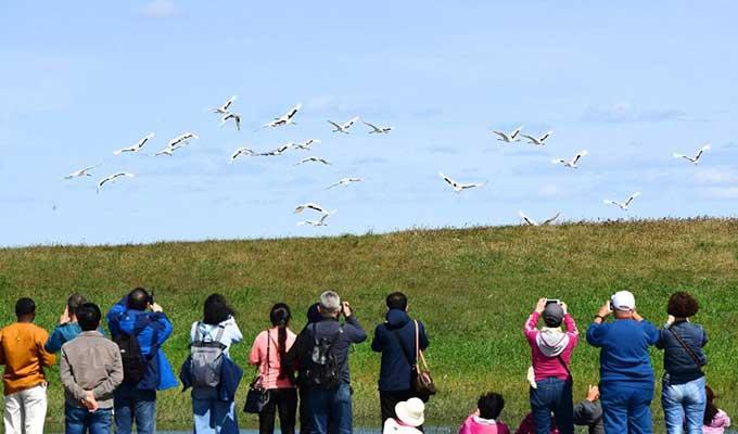 海内外游客汇聚保护区 观看丹顶鹤放飞