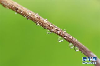 新华社发(周海军摄) 8月6日,一片树叶落在江苏省淮安市盱眙县被雨水图片