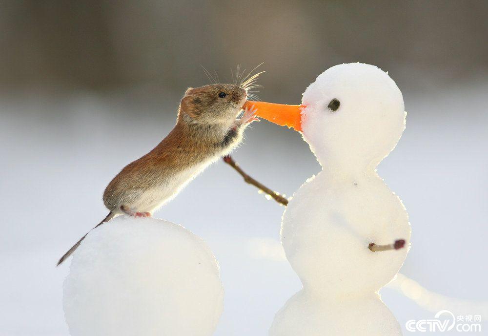 雪景美如画 冰天雪地里小动物们萌感十足