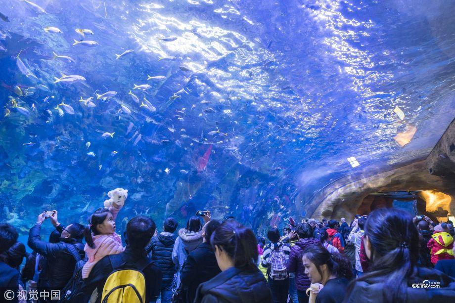 Plan Your Trip To Chimelong Ocean Kingdom World S Largest Aquarium Cctv News English