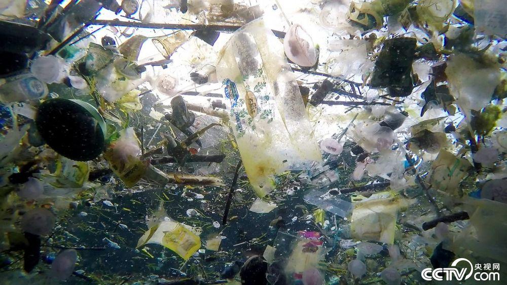 巴厘岛海洋垃圾成灾 鱼类都避之而不及