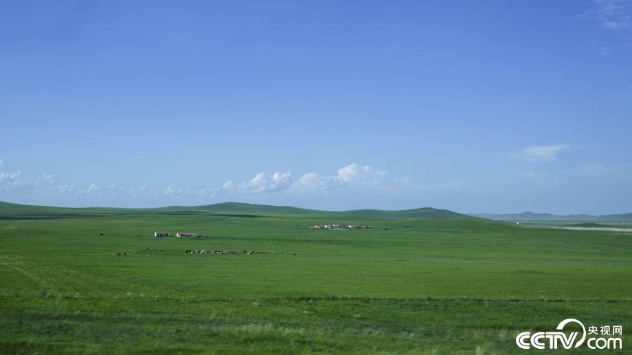 """【新时代·幸福美丽新边疆】""""天边草原""""乌拉盖 感受被风吹过的夏天"""