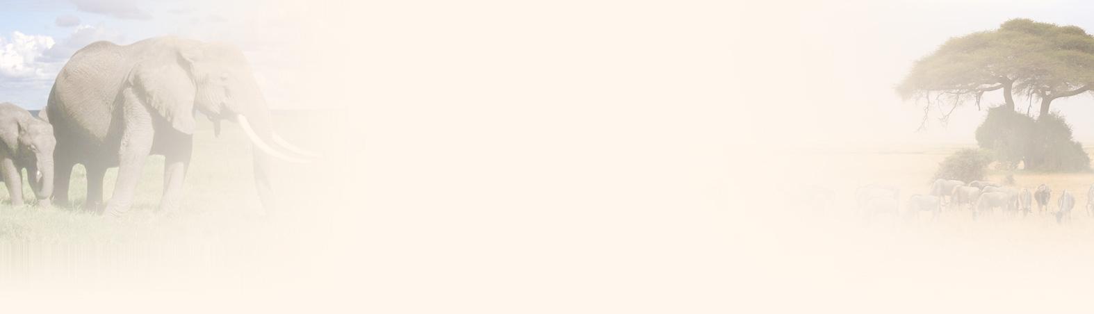 2014网络春晚节目单_肯尼亚_网络春晚_央视网(cctv.com)