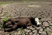 C. American nations facing dire drought