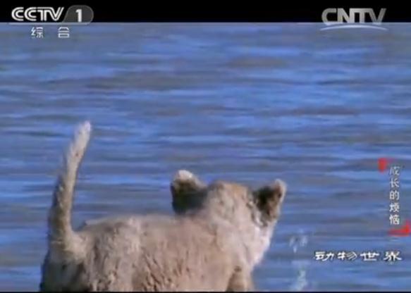 《动物世界》 成长的烦恼(一)