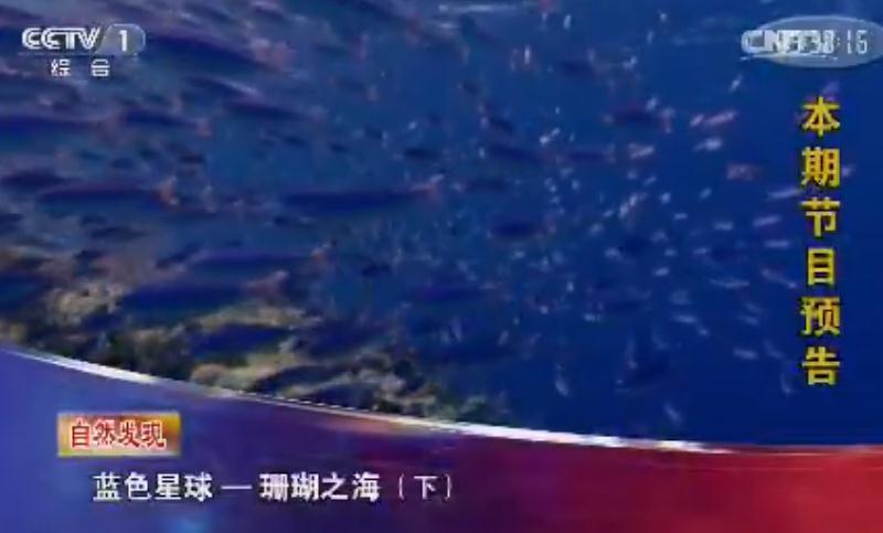 《人与自然》 自然发现:蓝色星球——珊瑚之海(下)
