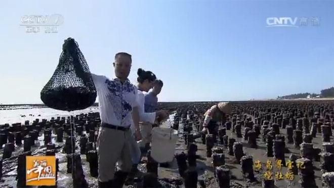[美丽中国乡村行]海岛寻宝记--挖牡蛎 20160721