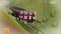 [每日农经]昆虫菜单:水虻也是美味 20160825来源:央视网2016年08月25日 22:38