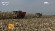 东北地区玉米保护性耕作模式 20160929