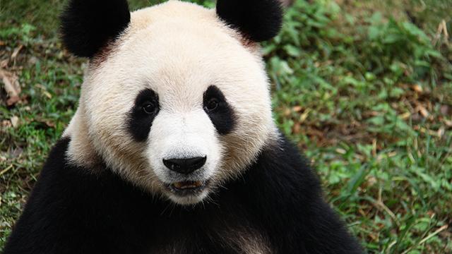 《熊猫那些事儿》番外篇:猫粉那些人儿 熊猫那些事儿