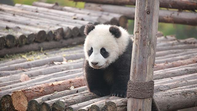 《当熊不让》第二期:撒娇真的会好命吗?