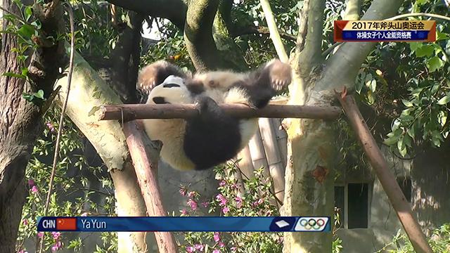 《熊猫档案》成长外挂第六期:体操公主雅韵