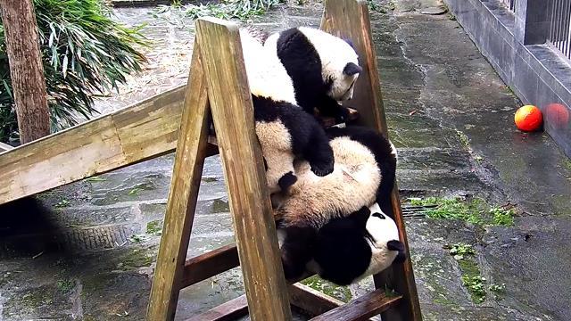 《精彩一刻》滑梯就是战场~