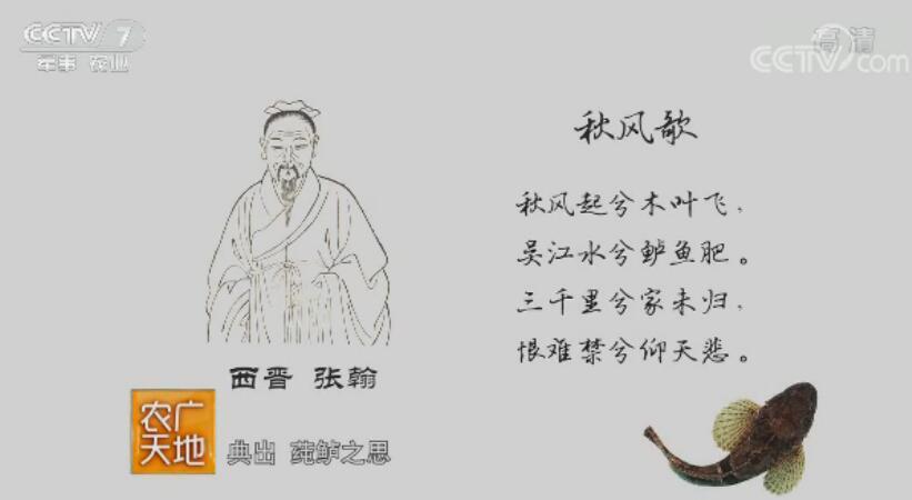 [农广天地]松江鲈鲜蟹黄肥 20180129
