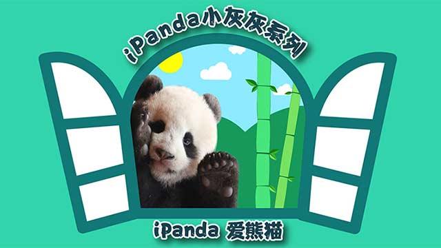 iPanda小灰灰系列表情包上线
