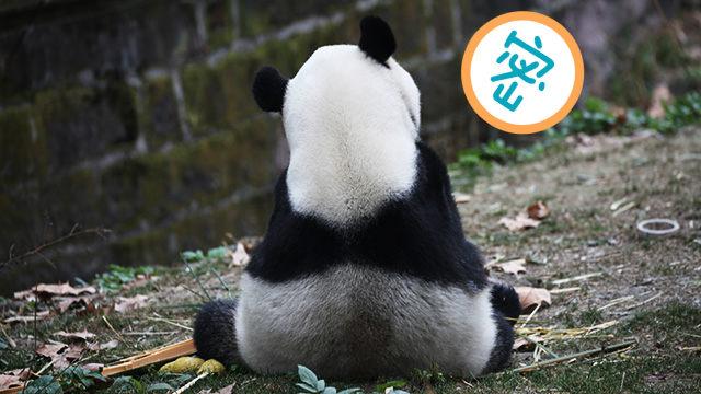 关心熊家体重什么的最烦了!
