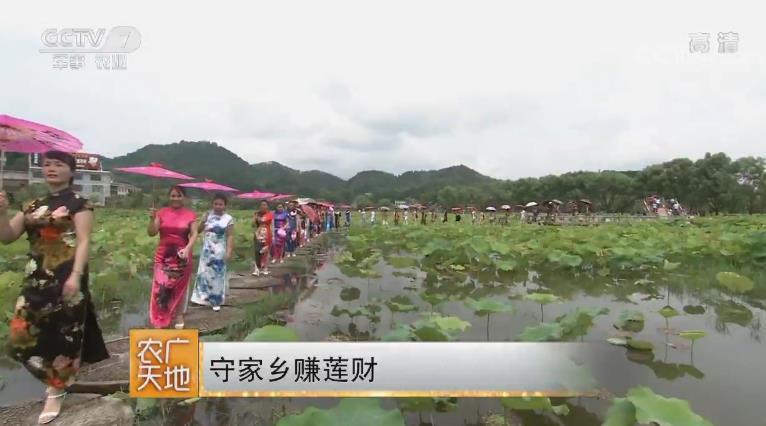 守家乡赚莲财 20180820