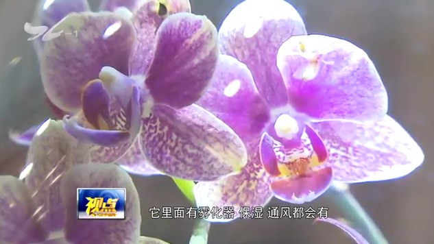 休闲渔博会给你好看 视点 2018.12.26 - 厦门电视台 00:14:43