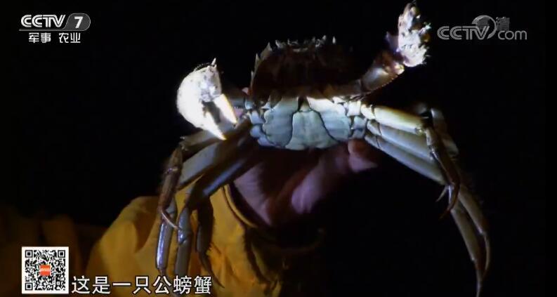 [科技苑]公母分居养 过年吃上大闸蟹 20190130