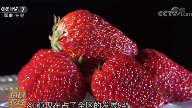 [每日农经]一见倾心的草莓 20190312