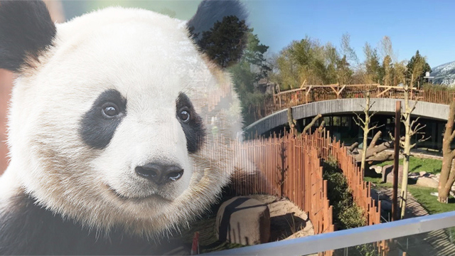 """大熊貓""""毛二""""""""星二""""在丹麥的家"""