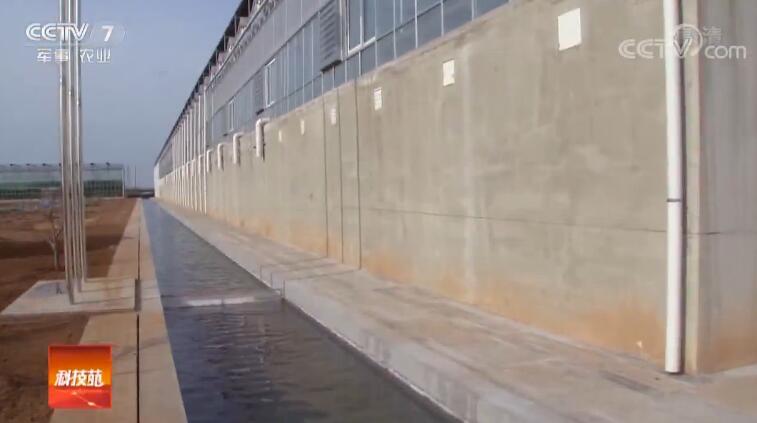 [科技苑]乡村治污记 蟑螂吃泔水 每天50吨 20190424