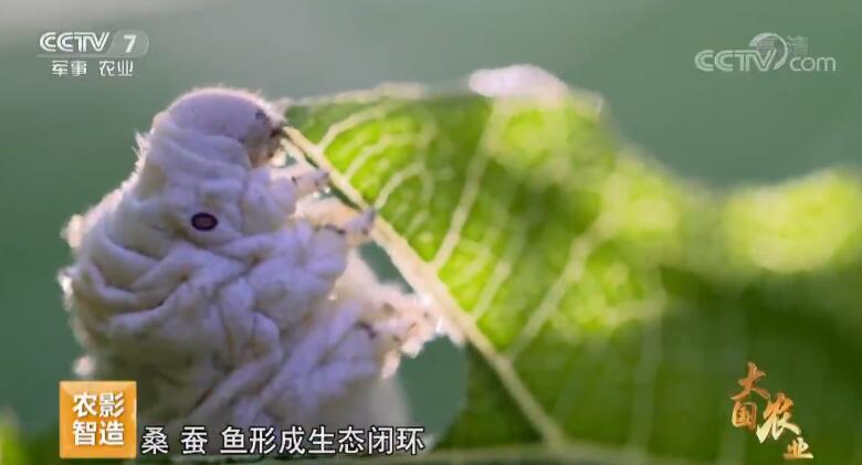 《大国农业》 第四集 尊崇自然