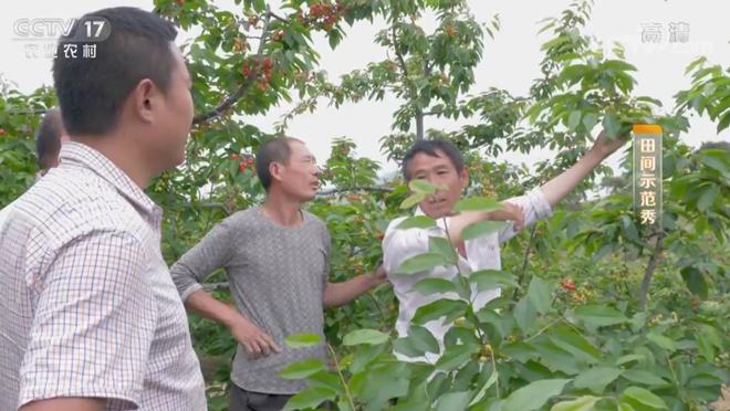 《田间示范秀》 20200429 高招养麻羊 巧法种樱桃