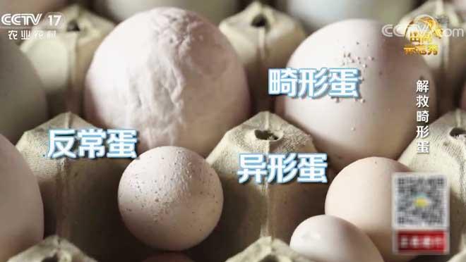 《田间示范秀》 20200707 解救畸形蛋