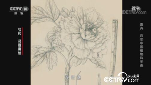 《读书》 20200731 张寿洲/马平 《嘉卉 百年中国植物科学画》 嘉卉 百年中国植物科学画
