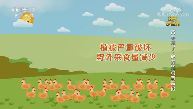 《田间示范秀》 20201002 高手来了·放养柴鸡有高招