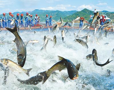 """2010年9月21日,""""中国杭州·千岛湖有机鱼文化节""""上的巨网捕鱼"""