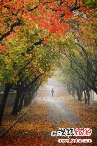 青岛赏秋好时光