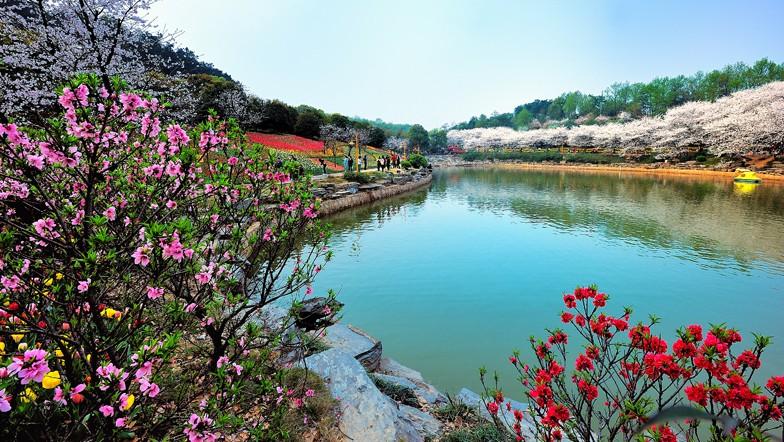 上海哪些地方可以欣赏樱花?