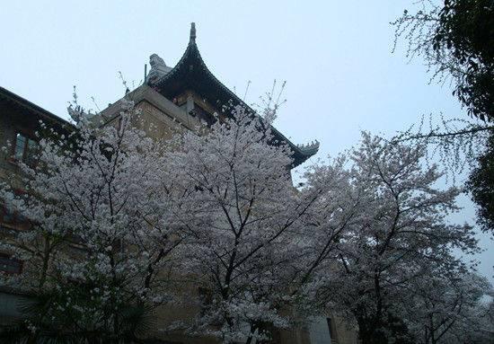 武汉大学赏樱花推出多项新规定 门票涨至20元