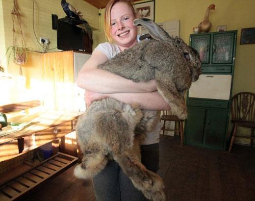 英国最胖的兔子