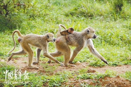 世界最环保的动物乐园:米库米国家公园