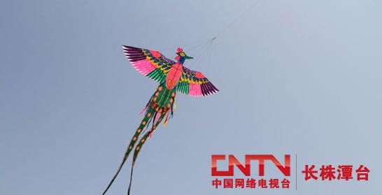 132平方米的大型软翅凤凰风筝