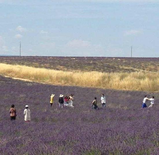 游客在法国薰衣草地为抢风景互殴