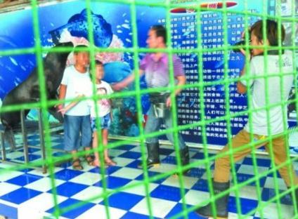 7月28日,郑州市动物园海洋馆迎来游园高峰,海狮一遍遍摆着pose与游人