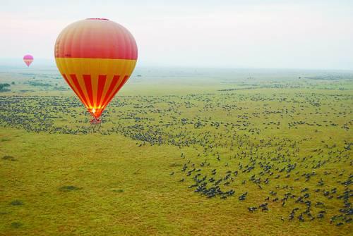 在热气球上拍到的角马迁徙