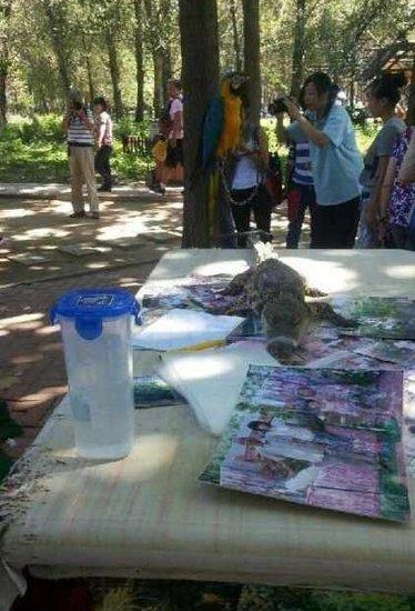 北京野生动物园被指虐待动物 鳄鱼嘴被捆住合影