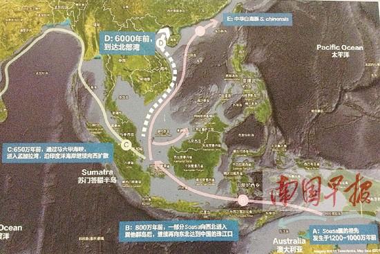 钦州白海豚身世之谜揭晓:独特的地理种群(图)