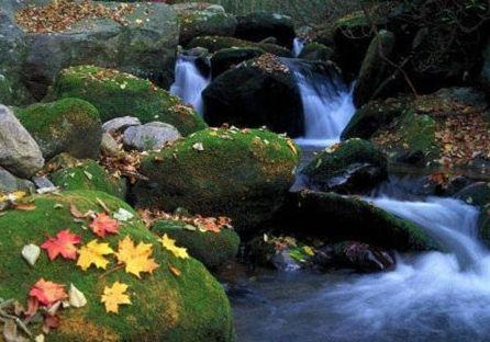 上甘岭国家森林公园