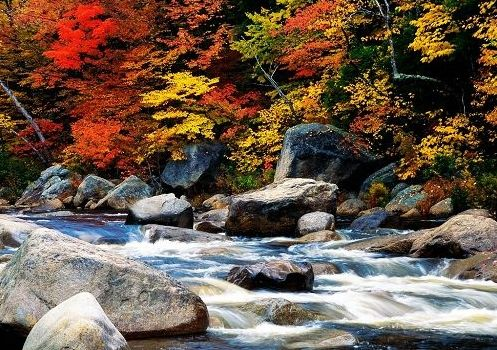 汤旺河国家公园