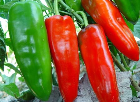 孕妇不能吃哪些食物:辣椒