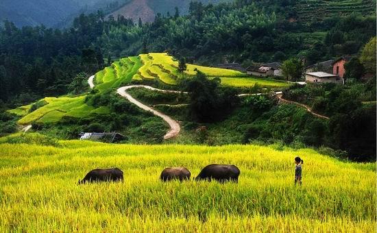 漳州:平和梯田風景美 引得游客如云來(圖)
