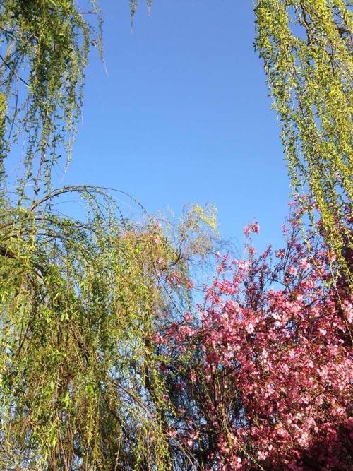春天的彩色